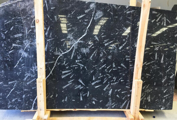 Fosil black marble slab from Moroco
